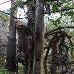 Barbet logs